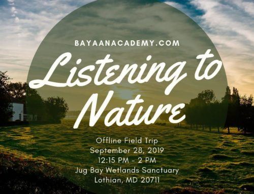 Field Trip: Listening to Nature